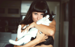 К чему снится кот женщине? К чему снятся коты.