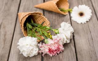 К чему снятся живые цветы хризантемы. Белые хризантемы