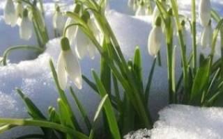 22 марта 40 святых приметы. Праздник Сорок святых — традиции, приметы, обычаи