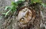 Гороскоп деревьев по дате рождения. Гороскоп друидов: природные покровители по дате рождения