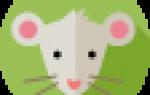 3 февраля гороскоп дате рождения. Список животных по годам восточного гороскопа