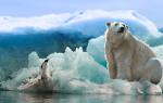 К чему снится белый медведь женщине замужней? К чему снится белый медведь, сонник, толкование снов.