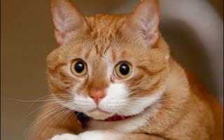 Совместимы ли вы со своей кошкой. Функции и свойства светил