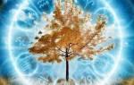 Как определить какое ты дерево по гороскопу. Гороскоп Друидов: как определить свое дерево-покровитель