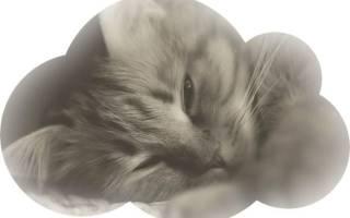 Сонник приходил умерший кот черный. Умерший кот снится живым