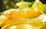 К чему снятся кукурузные початки. К чему приснилась кукуруза? Толкование других вариантов снов