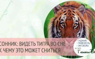 Приснились сон тигрица с тигренком что означает. К чему снится тигр — правильное толкование сна