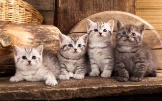 К чему снится брать котенка. К чему снятся котята? Толкование сна и интересные факты