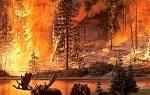 Пожар в лесу во сне к чему. Сонник: к чему снится пожар