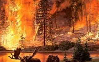 К чему снится пожар лес горел. К чему снится пожар