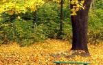 Церковный Православный праздник ноября. Приметы на день Ионы