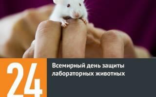 24 апреля в православии. День защиты лабораторных животных