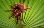 К чему снится пауки ползущие по мне. К чему снится ползать по соннику