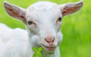 Деревянная коза.