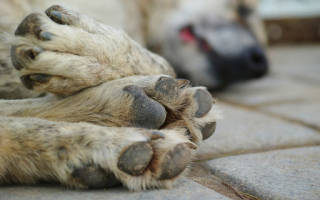 Сонник дохлая собака во сне. К чему снится дохлая собака