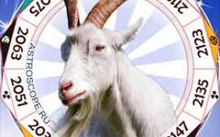Год козы гороскоп знакам зодиака. Год обезьяны для козы