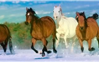 Гороскоп на февраль дева лошадь. Восточно-зодиакальный гороскоп: Лошадь – Дева