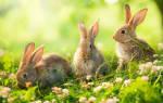 Пробовать сырое мясо кролика во сне. К чему снятся кролики