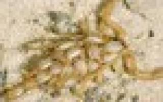 Интересные факты из жизни скорпионов. Скорпионы не так уж опасны для людей