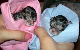 К чему сняться котята новорожденные. К чему снятся новорожденные котята