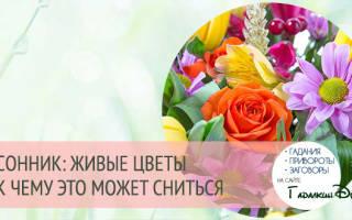 Сонник миллера цветы живые. К чему снятся цветы: живые в букетах, горшках, искусственные