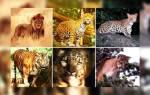 Тест какое ты животное по знаку зодиака. Стрелец – Кот