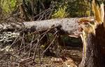 Сонник сломанное дерево. Сломанное дерево