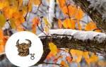 Гороскоп точный на ноябрь телец тигр.