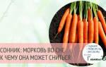 К чему снится собирать морковь с грядки. К чему снится морковь: не хватает витамина А? Чистить, сажать, копать – что делали с морковкой во сне