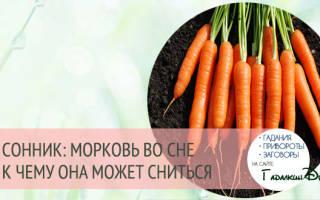 Толкование снов перебирать морковь. Приснилась морковь во сне, сонник