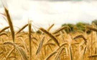 Если зерно умрет, то принесет много плода, а если не умрет, то останется одно.