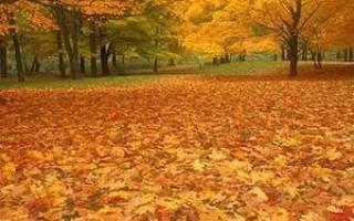Приметы на 1 ноября. Народные приметы на ноябрь