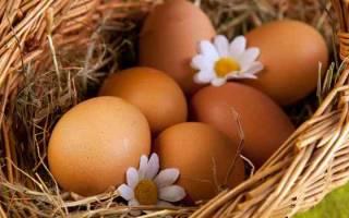 Сонник куриные яйца много в гнезде. Если снится много яиц в гнезде