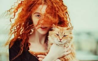 К чему снится выгонять рыжую кошку. К чему снится бело рыжий котенок