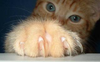 К чему снится поцарапала кошка до крови. Узнаем к чему может снится кошка во сне женщине, что об этом говорят сонники? Ознакомимся с нюансами