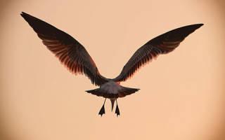 К чему снятся жареные крылышки. К чему снятся Крылья? Сонник куриные крылышки