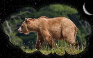 Сон медведица с медвежонком к чему снится. Магия чисел