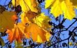 Приметы на 20. октября: приметы и поверья