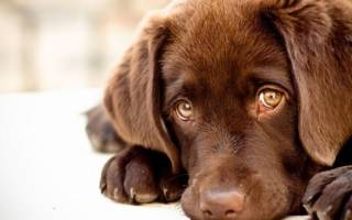Сонник задушил собаку. К чему снится Убить Собаку? Глисты у собаки а