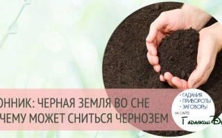 К чему снится покупать землю. Сонник земля, к чему снится земля, во сне земля