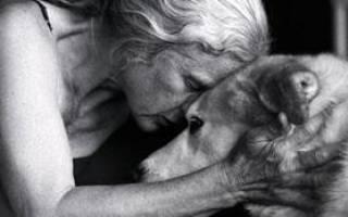 Если приснилось что твоя собака умерла. К чему снится смерть собаки