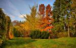 Осенний сонник что. Толкование сна про осень
