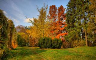 К чему снятся осенние деревья. К чему снится осень