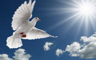Можно ли прибираться в духов день. Духов день — приметы и обычаи, что можно, а что нельзя делать? Можно ли убираться в Духов день