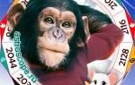 Какой год будет для обезьян на.