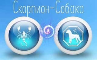 Год собаки и скорпион характеристика. Скорпион собака