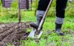 Неблагоприятные дни для здоровья в феврале. Садово-огородные работы, мероприятия по уходу за растениями