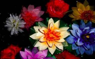 К чему снятся срезанные цветы. К чему снится цветок? Искусственные цветы во сне