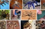 Пауки во сне к чему. К чему снятся пауки? Сонник пауки: большие и маленькие