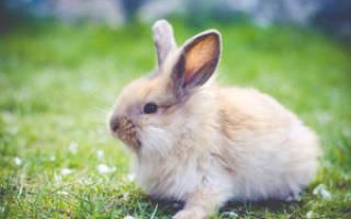 Снится тушка кролика. Толкование сна про кроликов: к чему они снятся